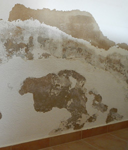 Rising Damp, Saltpetre. Dampness in buildings, Moisture & humidity problems. Damp house causes and treatment of dampness. Removing moulds, algae, fungi. Algarve, Portimão, Lagos, Lagoa, Carvoeiro, Aljezur, Sagres, Monchique, Silves, Albufeira