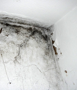 Dampness in buildings, Moisture & humidity problems. Damp house causes and treatment of dampness. Removing moulds, algae, fungi. Algarve, Portimão, Lagos, Lagoa, Carvoeiro, Aljezur, Sagres, Monchique, Silves, Albufeira